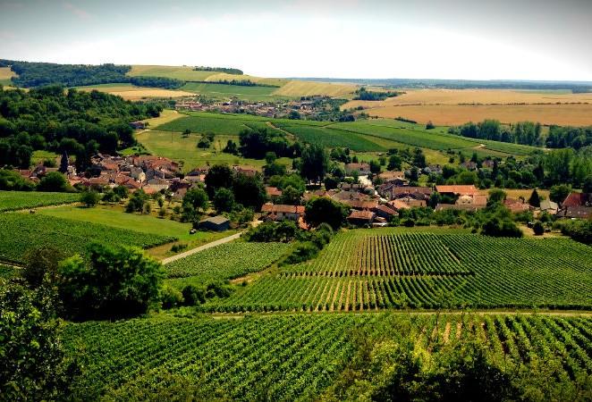 Réponse de la Présidence sur la filière viticole