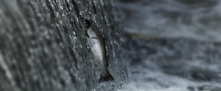 Favoriser les continuités écologiques aquatiques