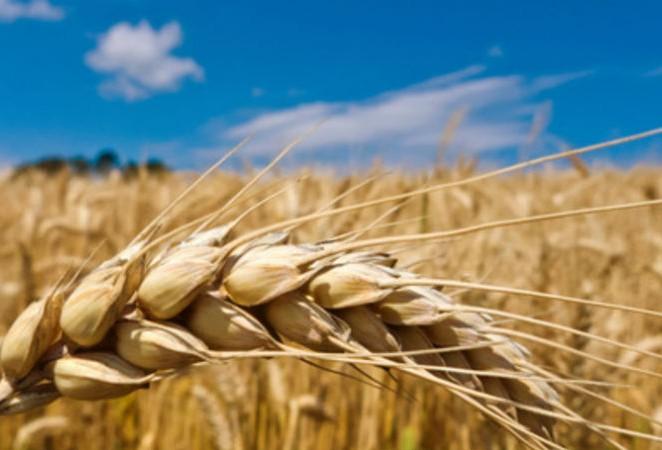 Problèmes agricoles : le courrier de Stéphane Le Foll